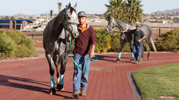 Groomsman Javier Solis walks Diabolical Dane as groomsman Tomas Peralez brings up Tijuana, during a press day at Sunland Park & Casino Wednesday to announce that the winter season of horse racing begins Friday. Both horses are trained by Todd Fincher of El Paso.