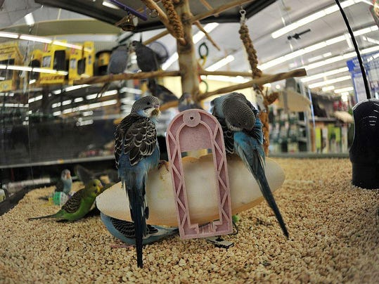 Birds are displayed at a pet store in Be
