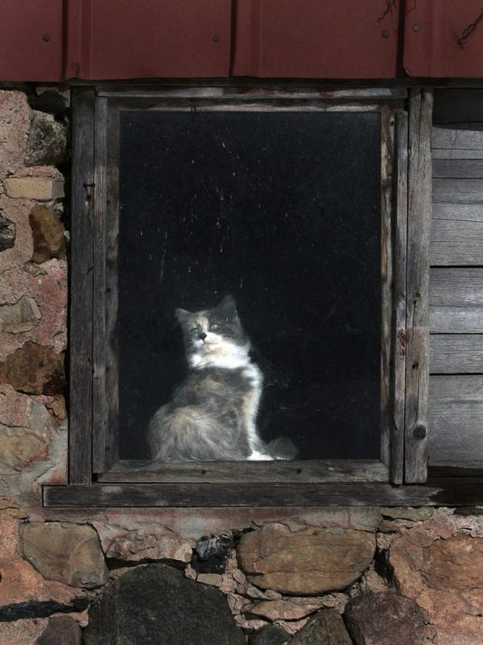 -Feral_Cats_021010WAG169.jpg_20100210.jpg