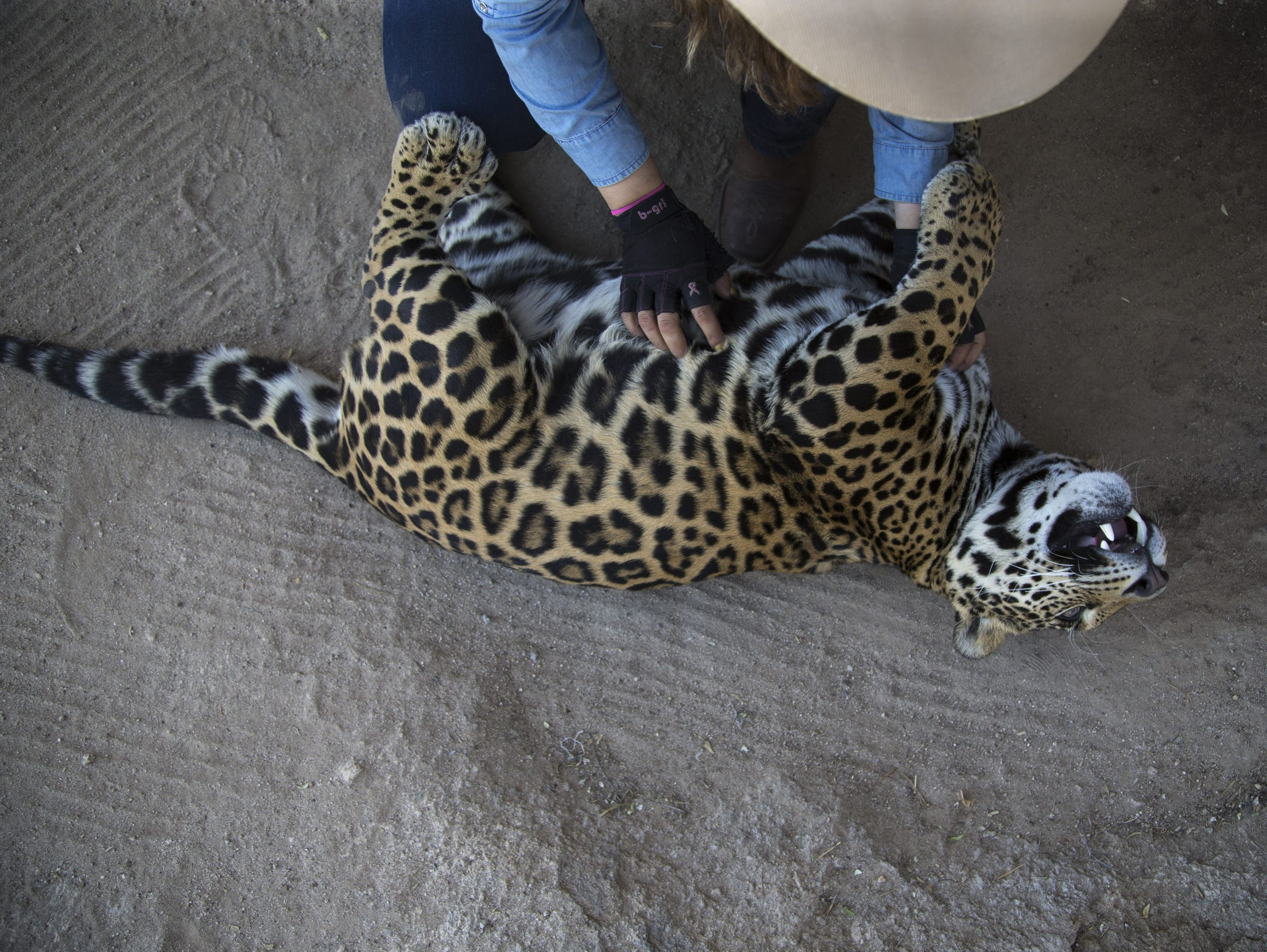 Shandira Astrid scratches Baawe, a 1-year-old male