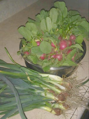 he Eichers' garden is still yielding green onions and radishes from the first spring planting.