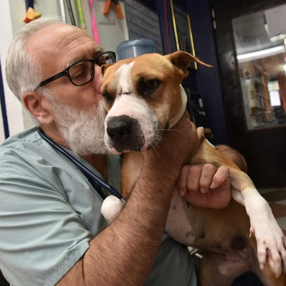 Dog recovers after being stabbed in head