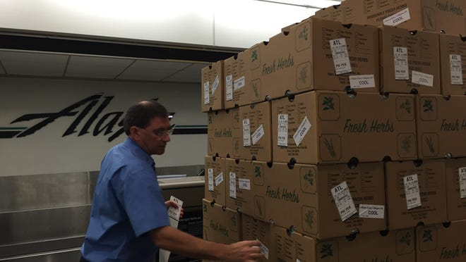 Chris Padula, a customer service supervisor with Alaska Airlines, prepares cases of fresh herbs for shipping before they are loaded onto Alaska Air flights.