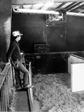 1984 Paul Demetry, supervisor of Great Adventure's Safari Park sits inside the giraffe barn.