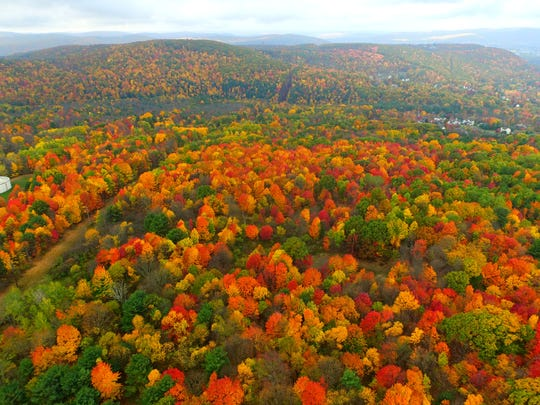 「Drone canada Color leaves」の画像検索結果