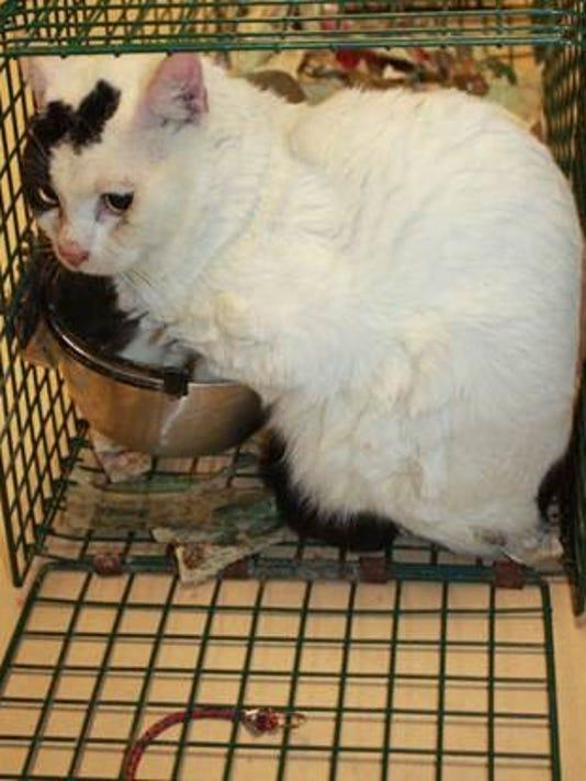 636199007701332551-cats4.jpg