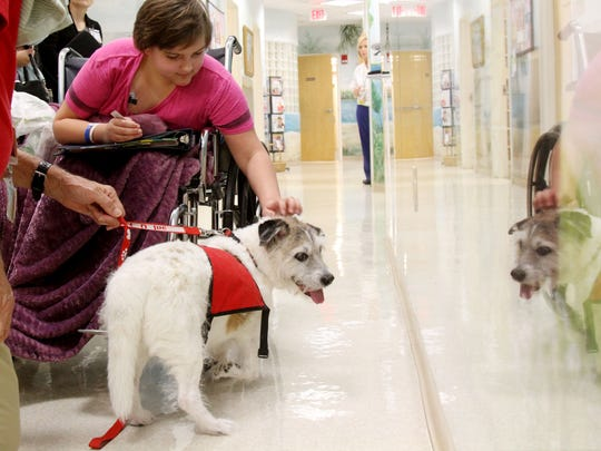 Tori Law, a patient at the Hematology/Oncology Center of the Golisano Children's Hospital, interacts with Happy, a terrier mix who is one of many therapy dogs, at the hospital. Happy has lost the use of his front right paw, but doesn't seem to mind.