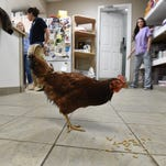 Local veterinarians help Reba adjust to life with one leg