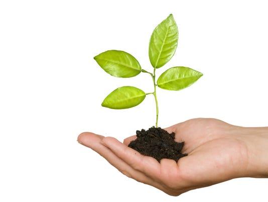 636437659675938826-BREBrd-01-03-2015-Daily-1-A003--2015-01-02-IMG-tree-planting.jpg-1-1-S49IR9EC-L543171741-IMG-tree-planting.jpg-1-1-S49IR9EC.jpg