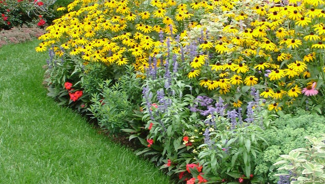 Sunny dwarf black-eyed Susans are interplanted with Stargazer lilies, 'Mango' New Guinea impatiens, and green and white Swedish Ivy.