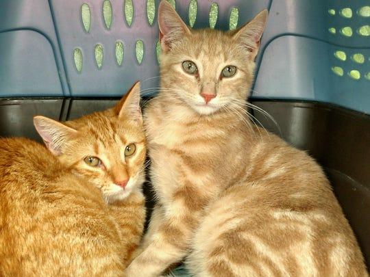 Brother and sister Kinder and Tatuli are hoping to find their forever family at the Randolph Animal Shelter.