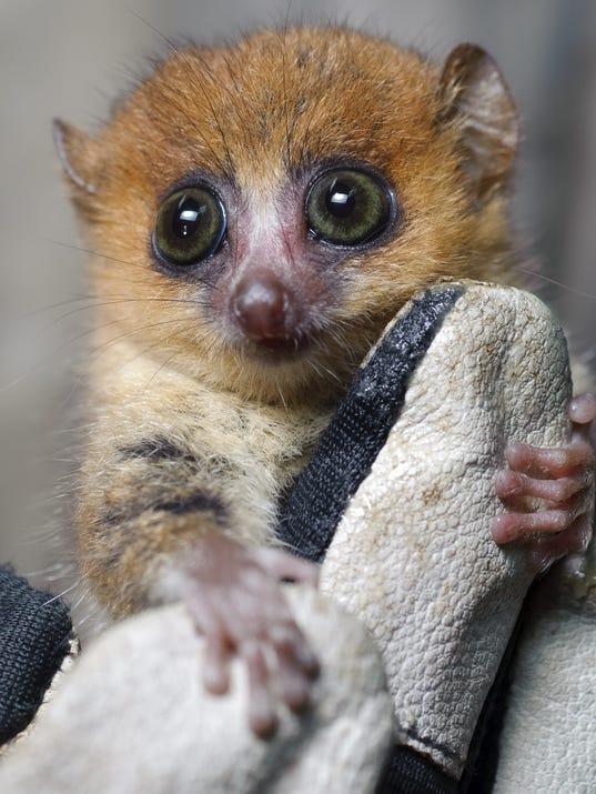 Island  of Lemurs: Madagascar film still