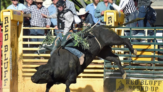 Jordan Hansen of Ponoka, Alberta, was tied for the lead in bull riding Saturday with a score of 88.5 points at the Red Bluff Round-Up. The Round-Up wraps up Sunday with a 1:30 p.m. start.