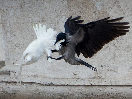 Vatican Peace Doves