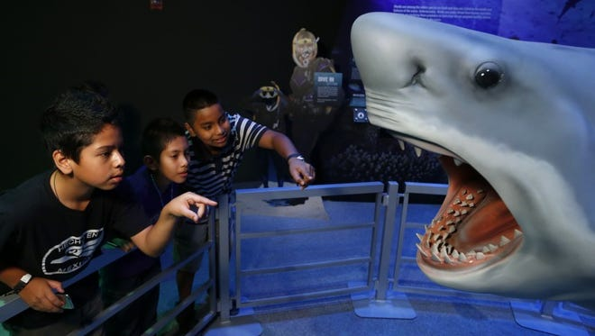 Visitors can come face-to-face with a great white shark at the Grand Rapids Public Museum.