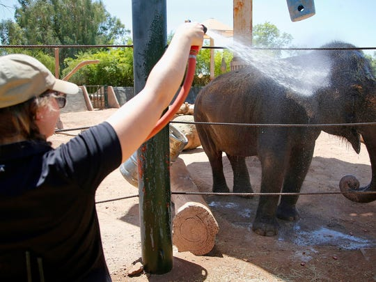 Sheena, a Asian elephant, gets a cold water spray shower from elephant keeper Corey Barr, as temperatures climb to 106-degrees at the Phoenix Zoo Thursday, June 2, 2016, in Phoenix. Temperatures are expected to hit 117-degrees over the weekend in Phoenix.
