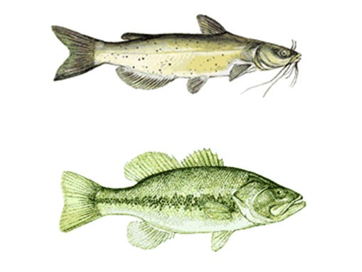 Mercury warning issued for bartlett lake fish for Fish with least mercury