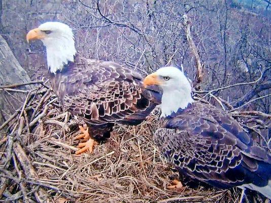 HES-SUB-022416-Eagles.jpg