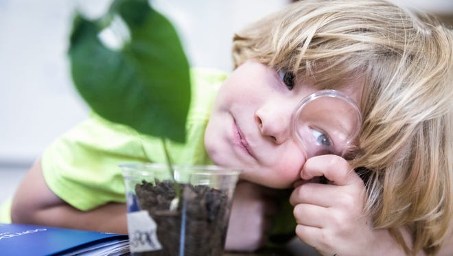 Isaak Ivey, 7, looks through a magnifying glass while in a science class studying lima bean plants during Asheville City Schools' Summer Reading Camp at Hall Fletcher Elementary School, Wednesday, July 25, 2018.