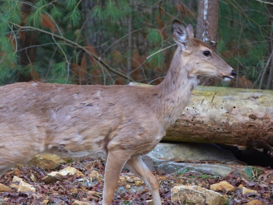 Chronic wasting disease in white-tail deer continues to climb.