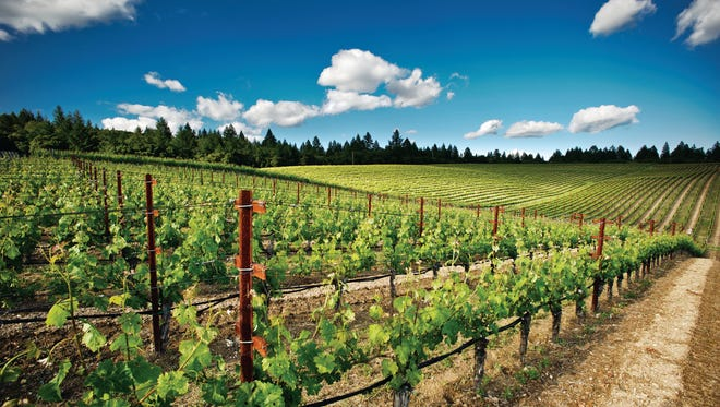 Hall wineries offer an unparalleled perspective on the Napa Valley.