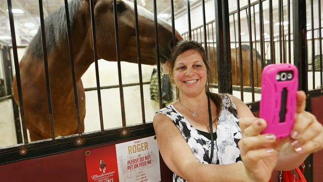 """Diane Stiles takes a selfie with Roger, a Budweiser Clydesdale on Sunday, the final day of the 2016  Indiana State Fair. """"He was blowing in my ear,"""" Stiles said."""