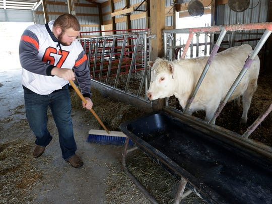 Bryce Ladwig sweeps the floor near his beef cattle, Thursday, April 19, 2018, in Plymouth, Wis.