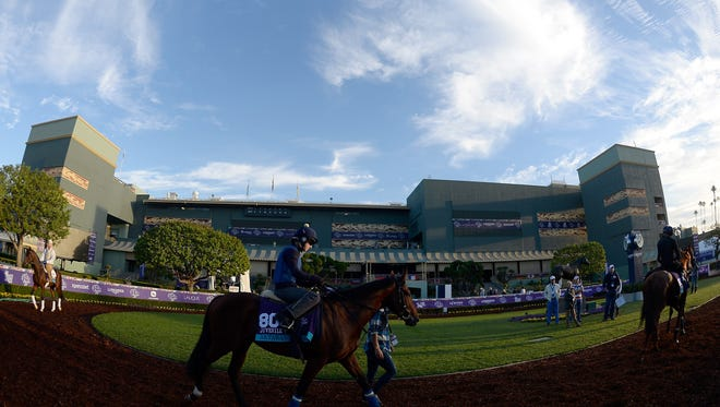 Horses train in the paddock Wednesday at Santa Anita Park in preparation for the Breeders' Cup.