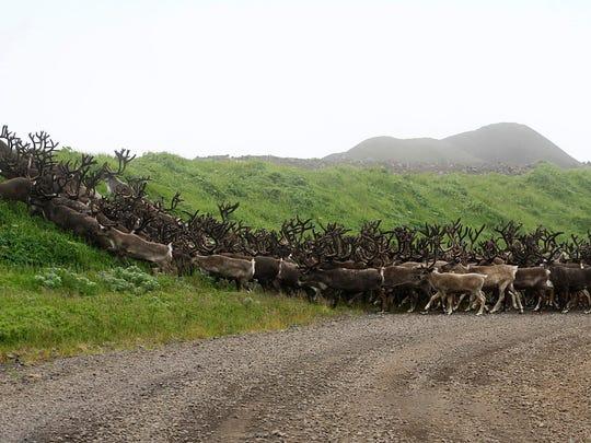 Alaska 043019