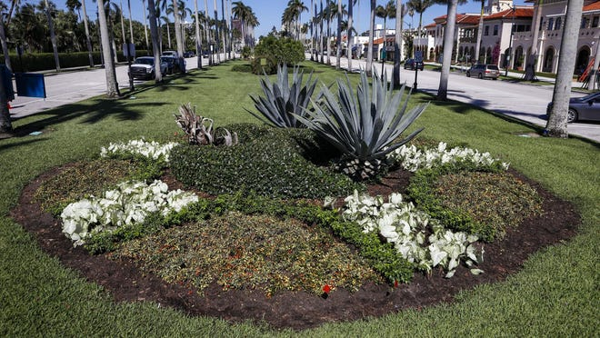 The plant circles in the Royal Poinciana Way median are getting a new look.