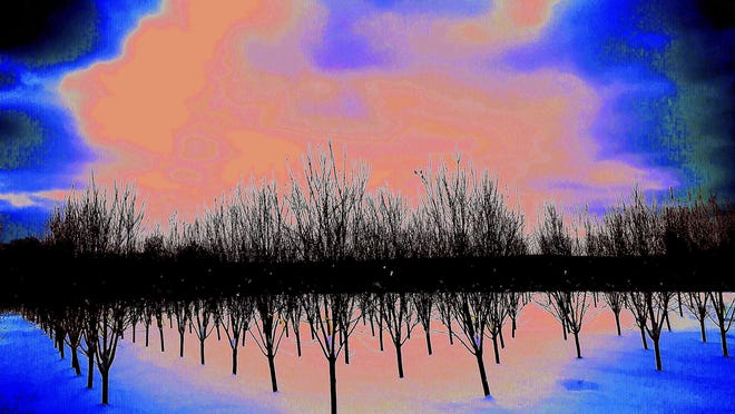 Lake Worth Beach resident Philip Paritsky captured this image of a tree farm with his iPhone.  The image is part of his virtual exhibition Philip Paritsky: Kodachrome or iPhone? opening Saturday on the Cultural Council for Palm Beach County's Instagram Live and Facebook Live pages.
