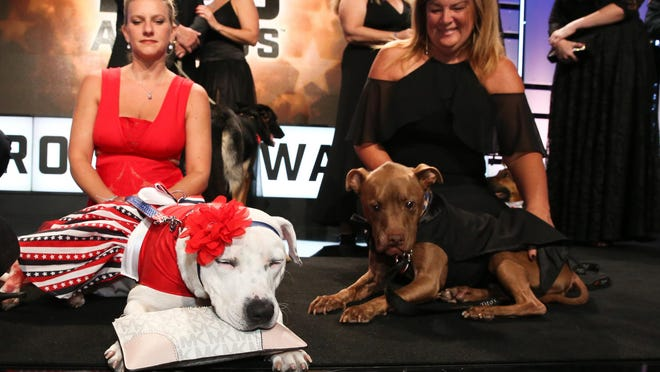 American Humane's eight annual Hero Dog Awards Luncheon recognized Hero Dog Abigail and Therapy Dog Aladdin at the Breakers in 2017.