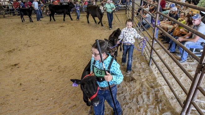 Bucket calf participants make their way around the show arena during last year's Finney County Fair. The full bleacher seating on 2019 for fair's livestock events will be limited in 2020 because of the COVI-19 pandemic, with only immediate family members being able to watch the competitions in person.