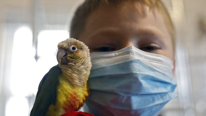 Volunteer Chance Martin, 10, plays with Baby Bird, a pineapple green-cheek conure, while at Charlie Brown Bird Rescue in Columbus on Sept. 9. The bird rescue is home to dozens of birds.