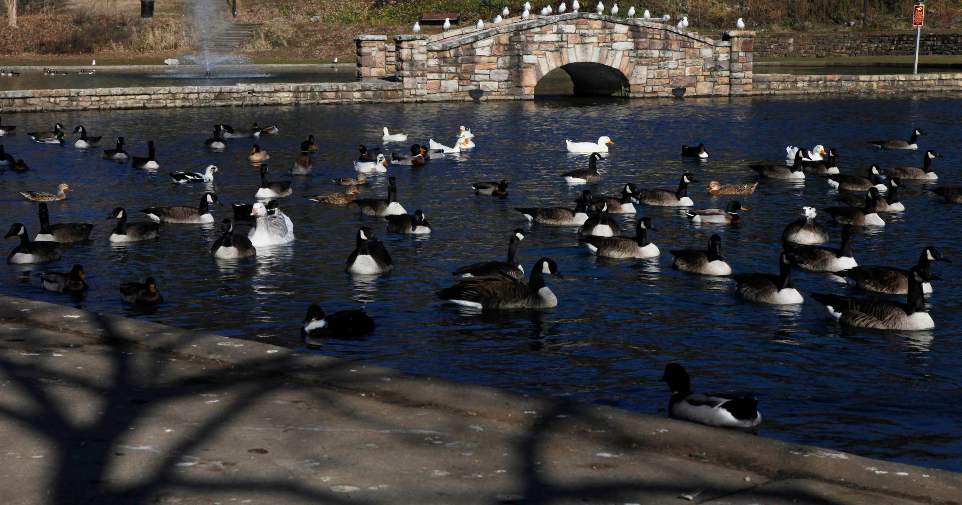 Salem addresses duck droppings at Lake Spring Park
