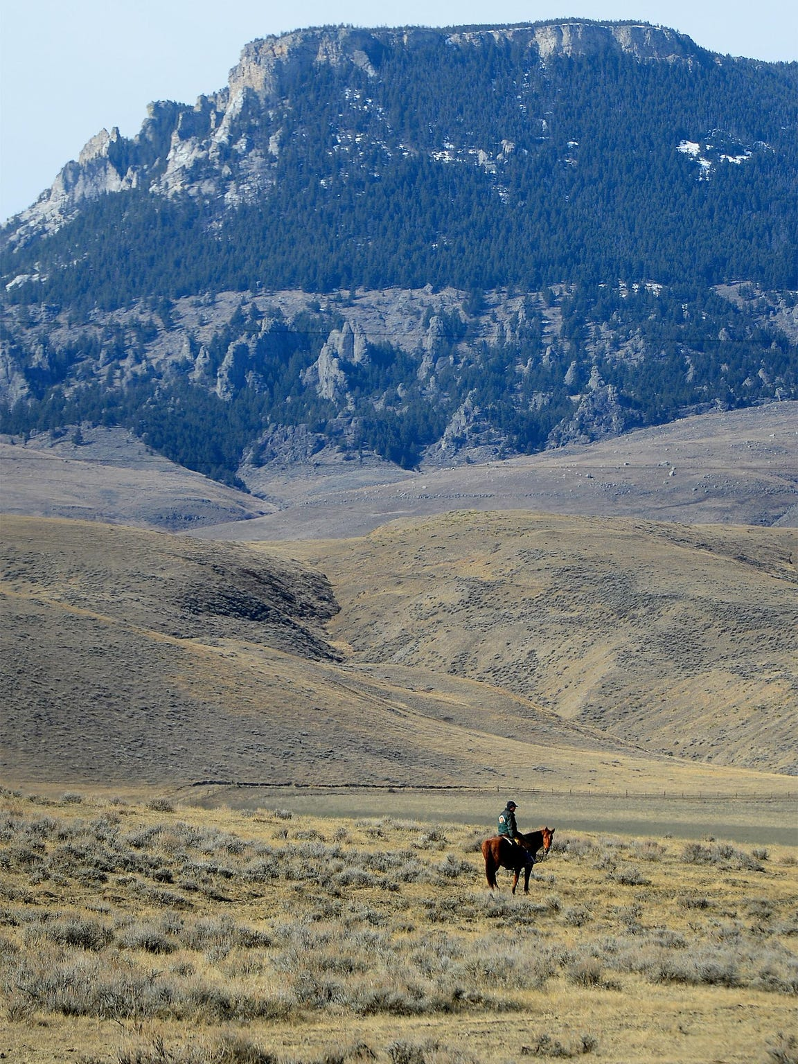Tim Seaman moves cattle on the Meissner Ranch at the