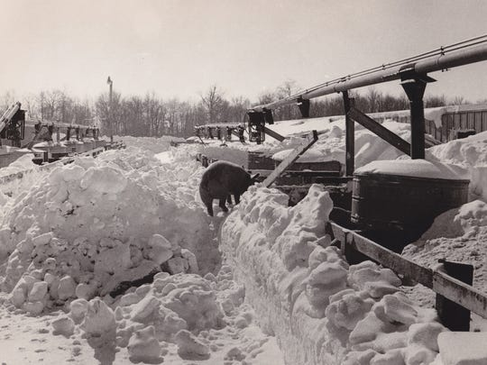 A pig makes his way through a snowy barnyard after the Blizzard of 1978.