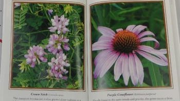 A flower featured in Patricia Rich's book about Gettysburg.