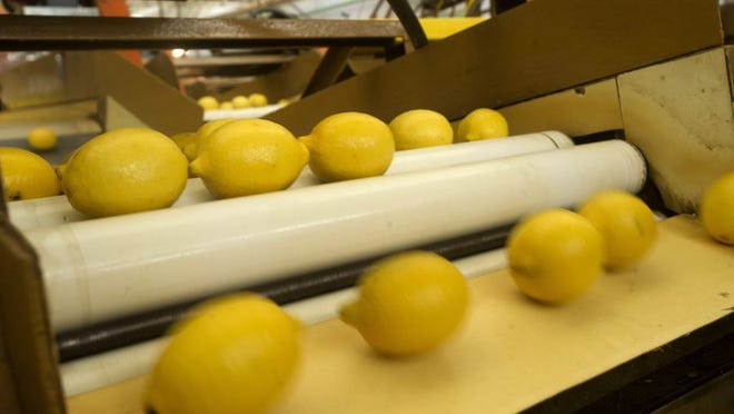 Limoneira Co. of Santa Paula has recently purchased Oxnard Lemon Company and layoffs notices have been sent to 155 employees. The Limoneira CEO said it plans to hire back at least of some of those who will be laid off.