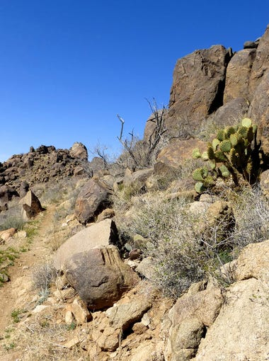 The Badger Trail ends at a junction with Castle Rock Trail, a 0.6-mile level path that swoops along the ridgeline to reach a formation of dark basalt.