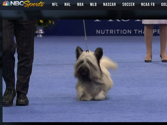 National Dog Show Cairn Terrier