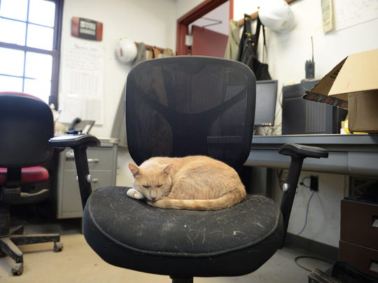 Three-year-old Jack, who has feline seniority at Heritage Hill, makes himself at home in the park's maintenance building.