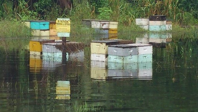Hives owned by Counsell Farms of Cape Coral were flooded by water from Hurricane Irma. Keith and Melissa Councell estimated they lost 600 to 700 of their 1,200 hives.
