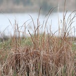 May offers good opportunities to visit Michigan wetlands
