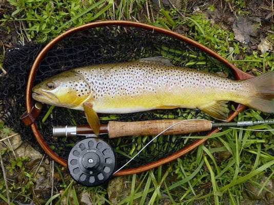 Brown trout.jpg