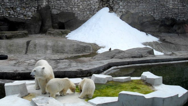 Polar bears and snow mountain at Moscow Zoopark.