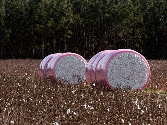 Cotton farmers in the Walnut Hill area show their support for breast cancer awareness by wrapping cotton bales in pink.