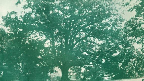 050112-sub-white-oak