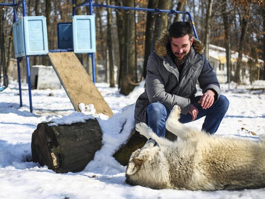 Volunteer John Michael Van Slambrouck plays with Lacy, a wolf dog, Feb. 22, 2019, at Howling Timbers in Muskegon.