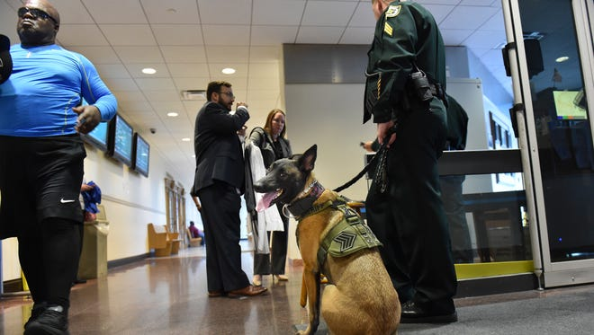 "Kona (center), a 3-year-old Belgian Malinois and St. Lucie County Sheriff's Office K-9, watches over the entrance of the St. Lucie County Courthouse with his handler, Sgt. Shawn Masters, on Aug. 22, 2017, in Fort Pierce. Kona is now a full-time member of the sheriff's office staff at the courthouse. ""Courthouses are scenes of violence across America,"" said St. Lucie County Sheriff Ken Mascara. ""Having a dog in a courthouse is one layer of security that I thought was necessary."""